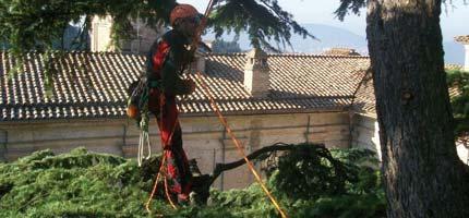 TreeClimbing Atlantis, Potatura Alberi Bologna, Abbattimento Alberi